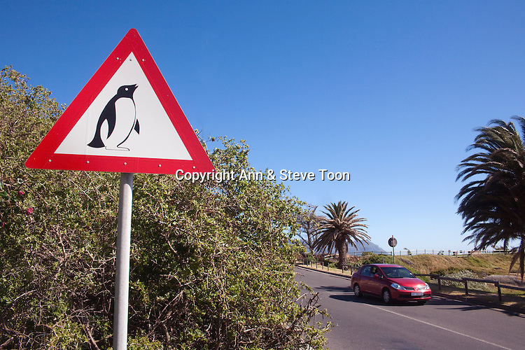 African penguin road warning sign, Spheniscus demersus, Table Mountain National park, Cape Town, South Africa
