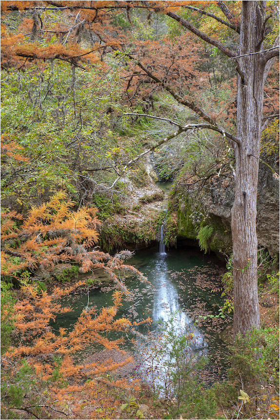 I've never seen anyone else along the path that leads to Twin Falls in Pedernales Falls State Park. In this image from one of my favorite places in the Hill Country, a small Texas stream - cold fed - flows through a forest of cypress and oak in mid-November.