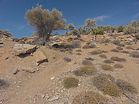 OR_LOCATION_45191