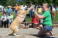 NWA Democrat-Gazette/ANDY SHUPE<br /> Lora Streeter of Springdale plays pattycake Saturday, May 6, 2017, with her dog, Athena, as they perform in the pet trick competition during the 25th annual Dogwood Walk benefitting the Humane Society of the Ozarks in Gulley Park in Fayetteville. The event featured dog trick and superlative competitions, vendors and a parade around the park.