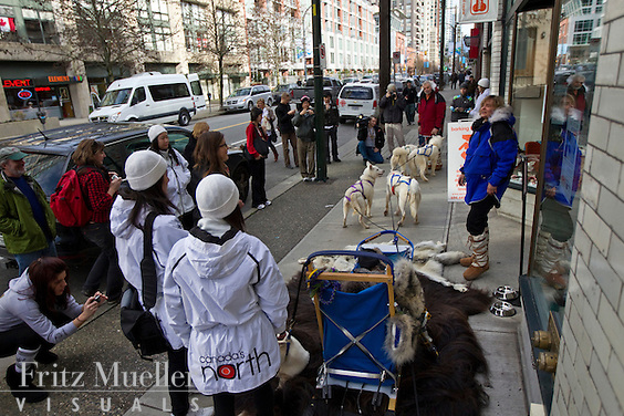 Judi and Olav Falsnes and their White Huskies from NWT greet people on the street around Vancouver