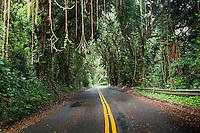 Canopy of trees over Nu'uanu Pali Dr., Honolulu, Oahu