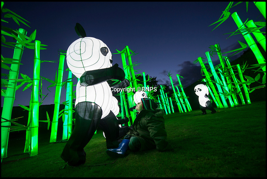 BNPS.co.uk (01202 558833)<br /> Pic: PhilYeomans/BNPS<br /> <br /> Jamie Swanson(4) meets an illuminated panda.<br /> <br /> The largest Chinese 'Festival of Light' seen in Europe is taking shape at the Longleat House in Wiltshire - A small army of over 50 skillled workers have flown in from the remote village of Zigong in central China to create the stunning spectacle.<br /> <br /> Among the different scenes are a 20-metre tall Chinese temple, a 70-metre-long dragon, created using more than 10,000 porcelain cups, bowls, plates and dishes, and the mythical qilin – a chimerical hooved creature with the head of a lion – featuring more than 30,000 glass phials filled with coloured liquid.<br /> <br /> Massive traditional Chinese masks are also featured and there is also a bamboo forest which is home to a family of life-size pandas, giant elephants, zebras, lions and deer as well as giant lotus flowers floating on the lake.<br /> <br /> Filled with thousands of LED lights and handmade by a team of 50 highly-skilled craftsmen from Zigong in China's Sichuan province, the lanterns recreate a magical world of myths and legends.<br /> <br /> Set amid the beautiful backdrop of the landscaped grounds and gardens surrounding Longleat House, the lit structures also spill out on to Half Mile Lake to create a stunning and enchanting experience for visitors.<br /> <br /> It's the first time a festival of this size has taken place in the UK and the Chinese team behind the spectacular event believe its size and complexity make it unique throughout Europe.