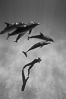 RW4668-Dbw. Atlantic Spotted Dolphins (Stenella frontalis), resident pods of wild dolphins in the Bahamas off Bimini and Grand Bahama Island offer eco-tourists from around the world a superb encounter swimming with the playful marine mammals. Bahamas, Atlantic Ocean. Color photo converted to black and white.<br /> Photo Copyright &copy; Brandon Cole. All rights reserved worldwide.  www.brandoncole.com