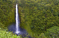 Akaka Falls gushes after a recent downpour.  The bright white falls contrast with the lush green surroundings.