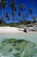 Coconut trees along Siviri Beach on the island of Efate, Vanuatu.