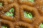 Super macro shot of polyps on a reef at keramas Islands Okinawa Japan.