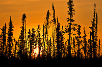Bporeal forest at sunset<br /> Ear Falls<br /> Ontario<br /> Canada
