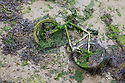 Discarded bicycle in harbour at low tide. Portsmouth, UK.