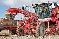 Harvesting potatoes with a Grimme Varitron 220 - Yorkshire September