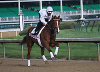 May 1, 2014: Rosalind gallops in preparation for the Kentucky Oaks at Churchill Downs in Louisville, KY. Zoe Metz/ESW/CSM