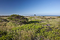 Coastal Terrace Prarie, like this at Ano Nuevo State Park in California, is rare.  An early spring morning with moon, Pacific waves and vegetation not found just anywhere.