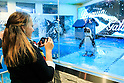 Customers take pictures of penguins at the Penguin Bar in Ikebukuro on April 11, 2016, Tokyo, Japan. The store which opened in 2013 allows customers to interact with live penguins and even feed them. The bar offers original drinks such as ''Penguin Bar Original Frozen Cocktail'' for 1,000 JPY ($9.25 USD) and various kinds of Penguin-shaped foods. According to the staff, the bar has become a popular tourist spot among foreign visitors. The first Penguin Bar opened in Okinawa 10 years ago. (Photo by Rodrigo Reyes Marin/AFLO)