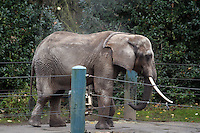 Elephants at Woodland Park Zoo