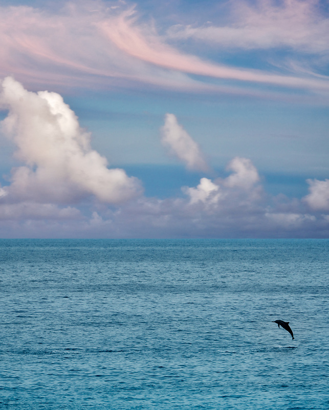 Spinner Dolphin jumping out of water.. Kua Bay., Hawaii, The big Island.