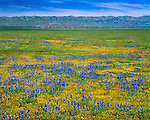 Spring wildflowers carpet the Carrizo Plain; roughly 50 miles (80 km) long and up to 15 miles (24 km) across. Contains the 250,000 acre (1,012 km²; 101,215 ha) Carrizo Plain National Monument (Est. 1/17/2001), largest single native grassland (San Joaquin Valley biogeographic province) remaining in California. Temblor Range in background. San Luis Obispo County, CA.