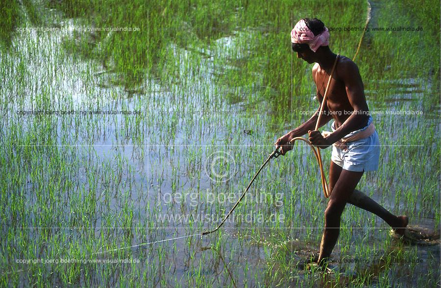 INDIA Karnataka Taccode, rice farming, spraying of synthetic pesticide / INDIEN Karnataka, Reisanbau, Schaedlingsbekaempfung mit chemischen Pestiziden