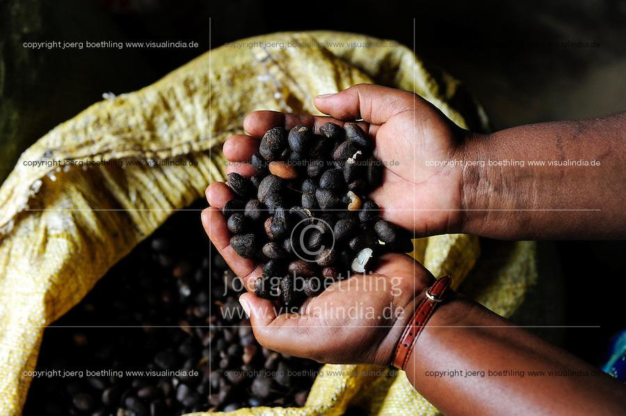 TANZANIA Bukoba, nuts of oil palm to process palm oil / TANSANIA Bukoba, Nuesse der Oelpalme zur Gewinnung von Palmoel