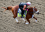 LOUISVILLE, KENTUCKY - MAY 02: Vekoma, trained by George Weaver, exercises in preparation for the Kentucky Derby at Churchill Downs in Louisville, Kentucky on May 2, 2019. John Voorhees/Eclipse Sportswire/CSM