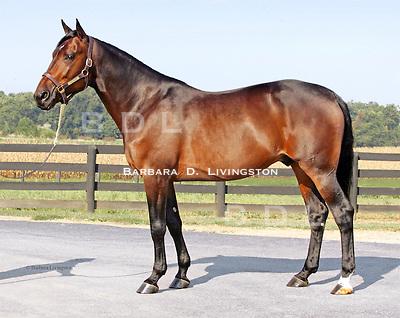 TOM RIDGE, Standardbred stallion at Nandi Veterinary Clinic, New Freedom, PA (Walnut Hall stallion).