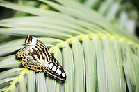 Beautiful butterfly resting on a palm leaf - Free Stock Photo.