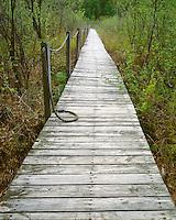 Boardwalk through wetlands in the Loda Lake Wildflower Sanctuary; Newaygo County, MI