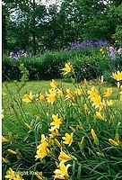 HB05-013x  English Cottage Garden - yellow day lilies, bearded iris - Hemerocallis spp, Iris spp.
