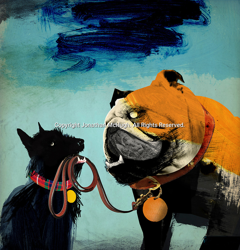 Scottish terrier holding leash of British bulldog in mouth