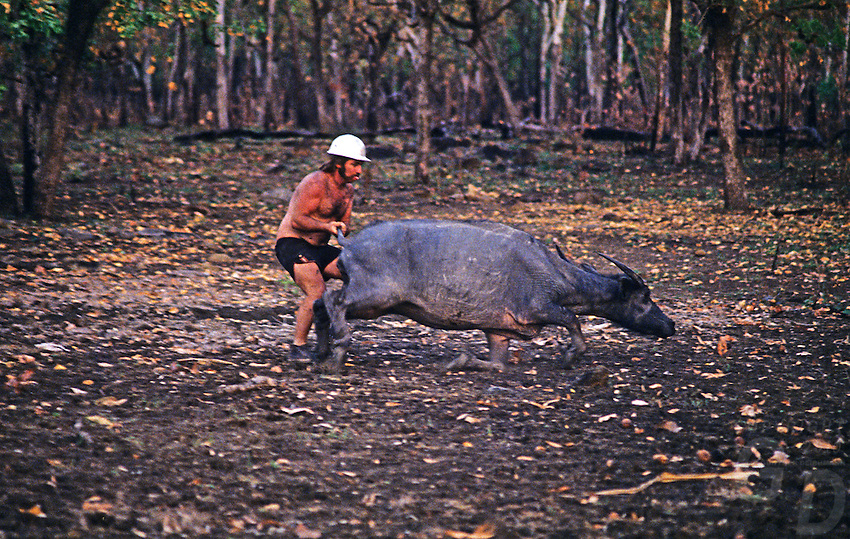 The last catch... Buffalo Hunter in the Top end of Australia, Northern Teritory