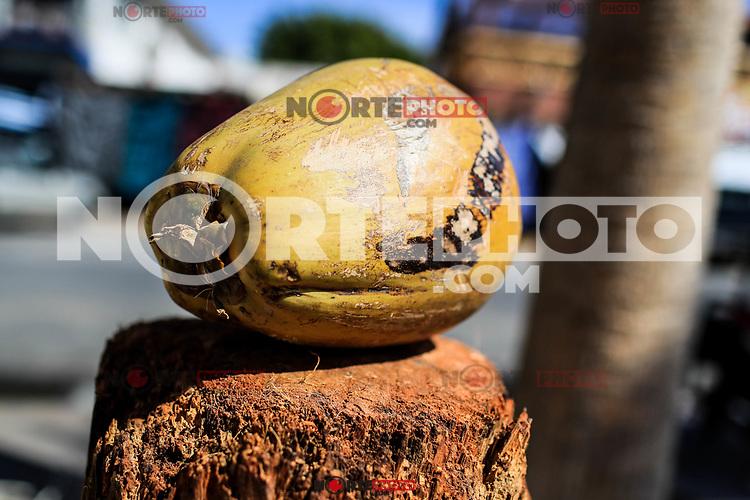 Coconut is a tropical fruit obtained from the coconut tree (Cocos nucifera), the most cultivated palm in the world. It has a thick outer shell (exocarp) round and elongated fruit of white, fibrous and oily flesh covered by a hard, brown and furry shell in the tourist destination Puerto Peñasco, Sonora, Mexico. (Photo: Luis Gutierrez /NortePhoto.com)<br /> coco es una fruta tropical obtenida del cocotero (Cocos nucifera), la palmera más cultivada a nivel mundial. Tiene una cáscara exterior gruesa (exocarpio)  fruto redondo y alargado de carne blanca, fibrosa y aceitosa cubierta por una cáscara dura, de color marrón y peluda  en el destino turistico Puerto Peñasco, Sonora, Mexico.