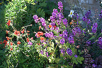 Flowers in a garden, Chipping, Lancashire.