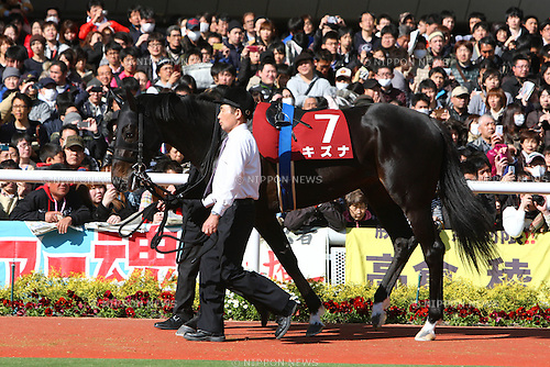 Kizuna,<br /> APRIL 6, 2014 - Horse Racing :<br /> Kizuna is led through the paddock before the Sankei Osaka Hai at Hanshin Racecourse in Hyogo, Japan. (Photo by Eiichi Yamane/AFLO)