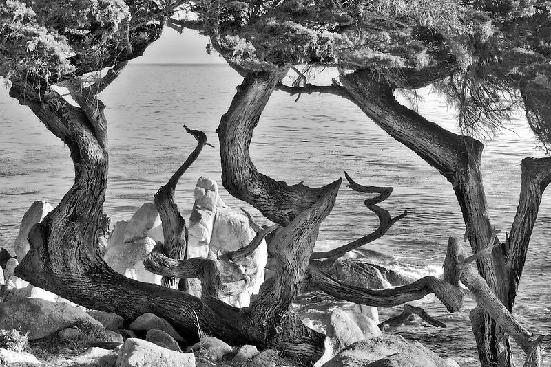 Monterey Cypress trees and ocean. 17 Mile Drive. Pebble Beach, California