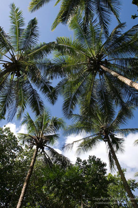 Milne Bay, Papua New Guinea; palm trees along pathway to skull caves , Copyright © Matthew Meier, matthewmeierphoto.com