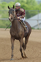 HOT SPRINGS, AR - APRIL 15: Excessive #10, with jockey Alex Birzer aboard after the 5th race at Oaklawn Park on April 15, 2017 in Hot Springs, Arkansas. (Photo by Justin Manning/Eclipse Sportswire/Getty Images)