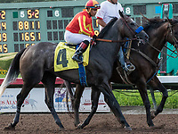 CYPRESS, CA. JULY 8: #4 Pretty N Cool ridden by Martin Garcia in the post parade of the Great Lady M Stakes (Grade ll) on July 8, 2017 at Los Alamitos Race Course in Cypress, CA (Photo by Casey Phillips/Eclipse Sportswire/Getty Images)