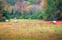 Hay field in fall in the Ouachita National Forest in Arkansas.
