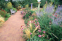 At the Denver Botanic Garden  in Denver, Colorado, a brick pathway lends a sense of balance and elegance to a garden bursting with Purple Coneflower ( Echinacea purpurea,) Russian Sage (Perovskia atriplecifolia) and other colorful perennials.