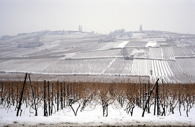 Alsace, Haut-Rhin (68). Vignobles sous la neige. *** Vineyards under snow. Haut-Rhin, Alsace.