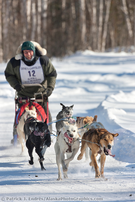 Edie Forest drives an 6 dog team in the 2009 Limited North American sprint sled dog race, Fairbanks, Alaska.