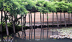 Photo shows a pond by  the kagura-den hall at Izumo Taisha shrine in Izumo, Shimane Prefecture, Japan. . Photographer: Robert Gilhooly