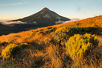 Taranaki Region Photos | North Island | New Zealand
