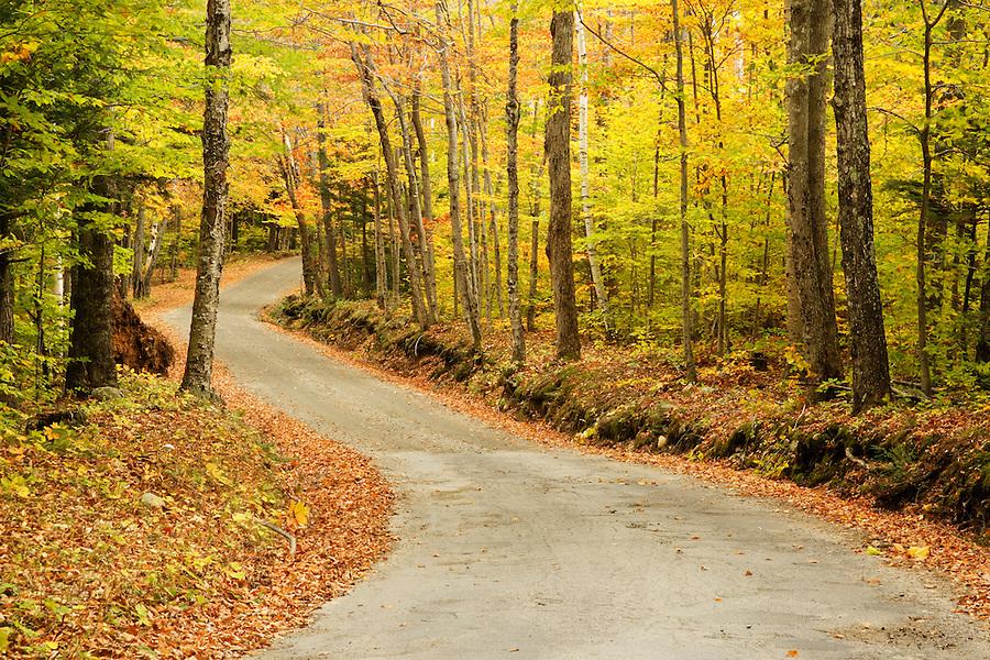 Road through autumn forest, White Mountains near Gorham, Vermont, USA