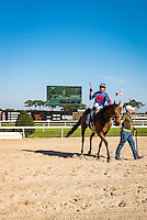 OLDSMAR, FL - JANUARY 21: No Fault of Mine #3 (blue cap), ridden by Daniel Centeno, throws his crop, after winning the Wayward Lass Stakes, on Skyway Festival Day at Tampa Bay Downs on January 21, 2017 in Oldsmar, Florida. (Photo by Douglas DeFelice/Eclipse Sportswire/Getty Images)