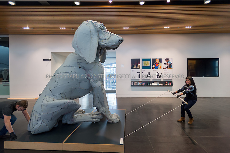 12/17/2014&mdash;Tacoma, WA, USA<br /> <br /> <br /> Ellen Ito (right), an exhibition and collection assistant at Tacoma Art Museum, helps to move &ldquo;Leroy, the Big Pup&rdquo; (2004 by Scott Fife) into position in the main hall of the Tacoma Art Museum (TAM) before opening the museum to the public on Wednesday, December 17th, 2014.<br /> <br /> Photograph by Stuart Isett<br /> &copy;2014 Stuart Isett. All rights reserved.