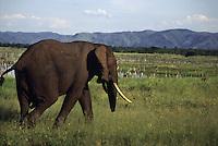 Zimbabwe fauna
