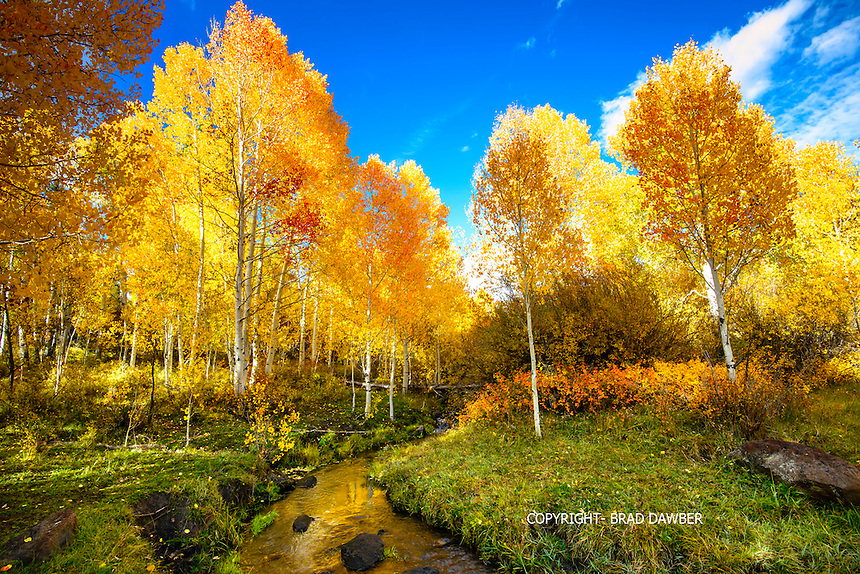 After a late afternoon rain shower on Boulder Mountain , Utah. Aspens were in all their glory on October 9, 2014. Late afternoon light lit up the stream and the gold and red tinged aspens, way off the beaten path.