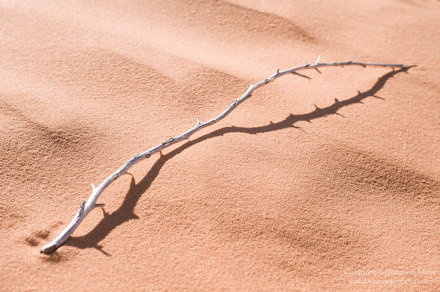 Coral Pink Sand Dunes State Park, Kanab, Utah; leafless, dead branch casting a shadow on the sand