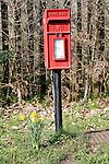 Rural Royal Mail post pillar box with daffodils