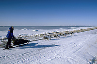 K.Anderson on Trail into Shaktoolik on Norton Sound<br /> Bering Sea